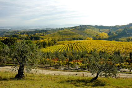 Landschaft in Chianti