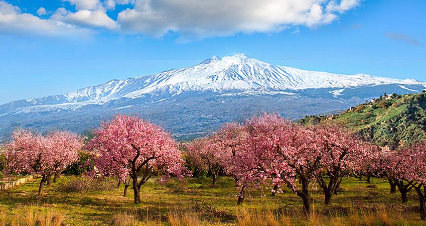 Mandelblüte auf Sizilien