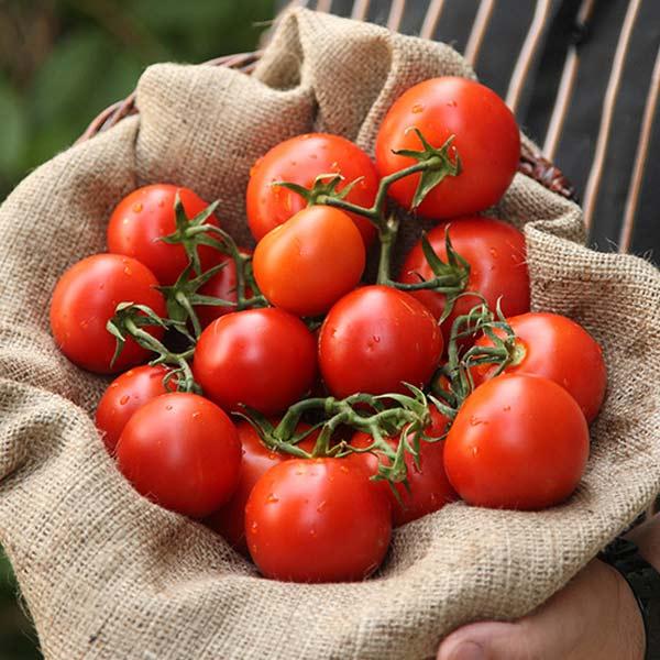 Lycopin – Macht aus Tomaten Superfood